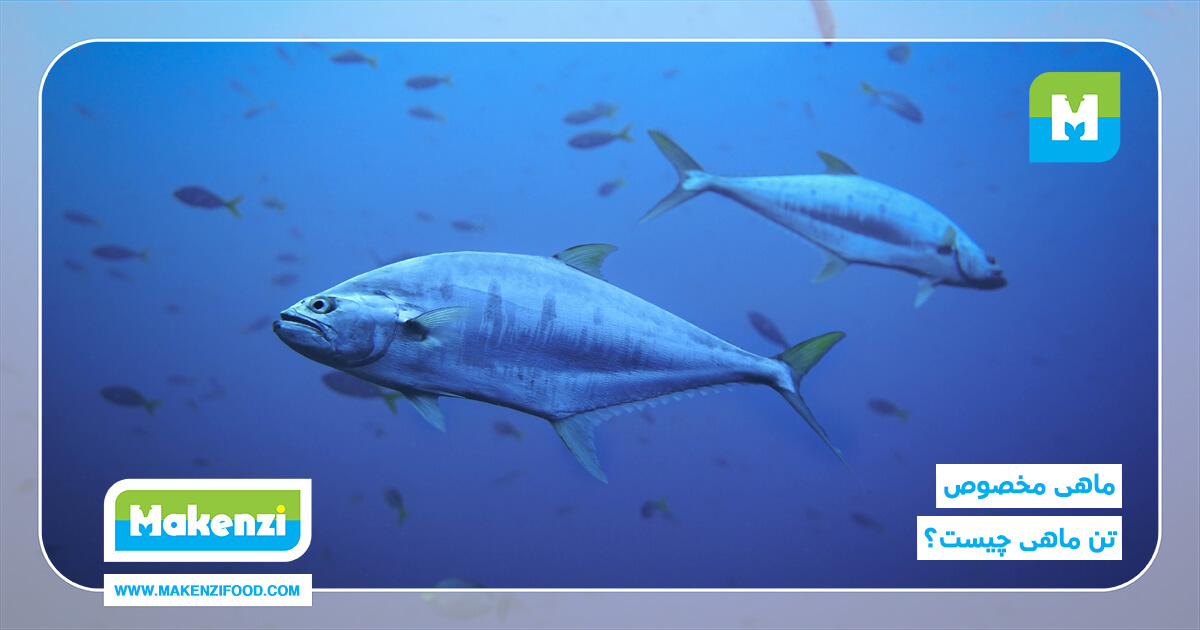 ماهی مخصوص تن ماهی چیست